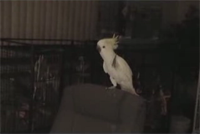 Yes... a dancing parrot!-thumbnail